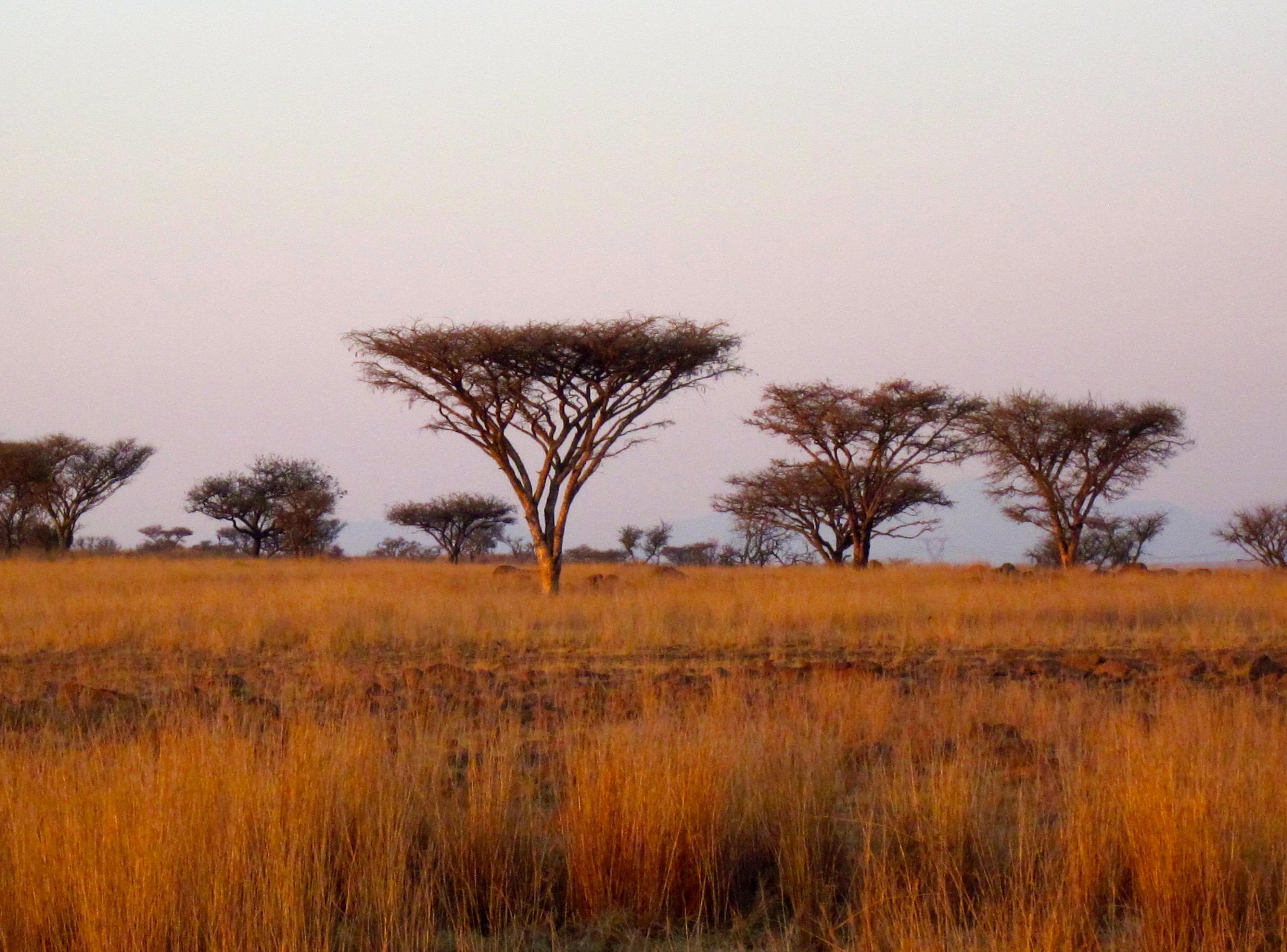 South African Safari -...